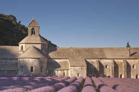 lavendin: Lavender in front of the abbaye de Senanque in Provence
