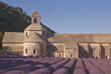 abbaye: Lavender in front of the abbaye de Senanque in Provence