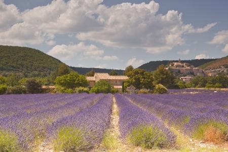Lavendelvelden in de buurt van Banon in de Provence Stockfoto