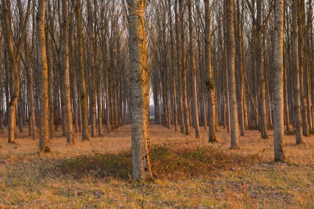 Rows of trees, Chaumont-sur-Loire, France. Stock Photo - 14623117