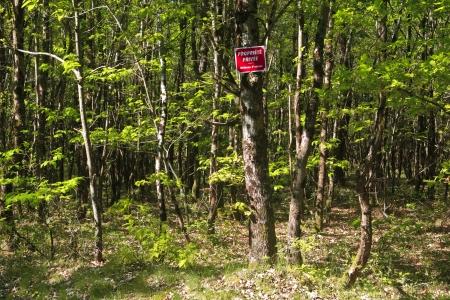 regimented: Woodland in Sologne, France Editorial