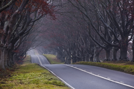 kingston: The avenue of beech trees at Kingston Lacy in Dorset