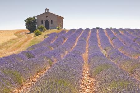 Een kleine kapel onder een gebied van lavendel. Stockfoto