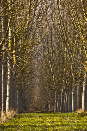 Rows of trees in a french woodland. Stock Photo - 16581826