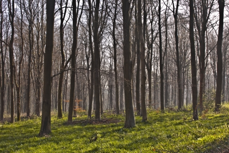 wiltshire: West Woods in Wiltshire.