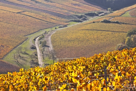 Autumn colours in vineyards near to Chablis  Stock Photo