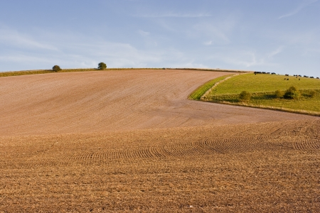wiltshire: Farmland in Wiltshire