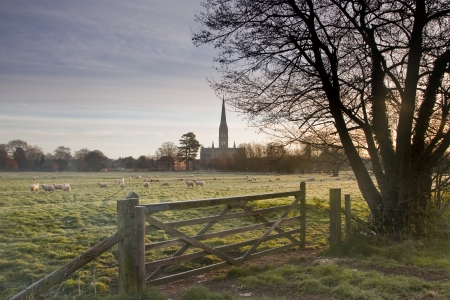 Salisbury cathedral at dawn. photo