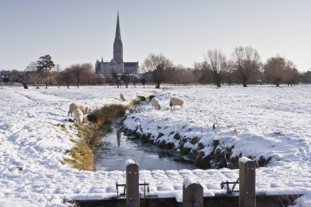 Salisbury cathedral in the snow. photo