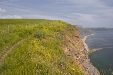 south west coast path: Il sud ovest costa percorso nel Dorset.