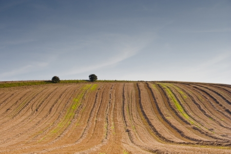 wiltshire: Ploughed field in the Wiltshire countryside.