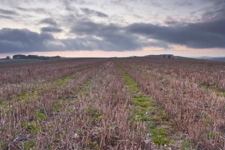Een veld in het platteland van Dorset, Engeland. Stockfoto