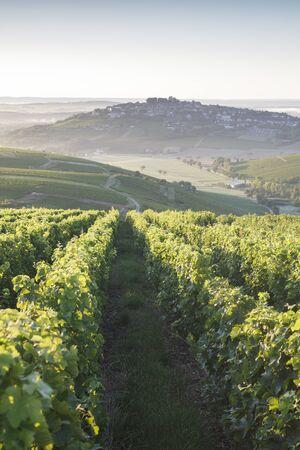 Vineyards surrounding the village of Sancerre, France.