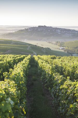 Vineyards surrounding the village of Sancerre, France.