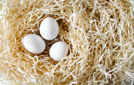 Three white chicken eggs lying in the straw nest. Organic farm natural background. Hen eggs bathed in bright morning sunshine. Copy space for text