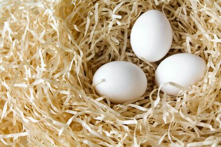 Three white chicken eggs lying in the straw nest. Organic farm natural background. Hen eggs bathed in bright morning sunshine.