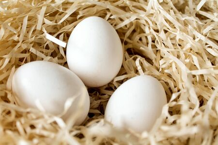 Three white chicken eggs lying in the straw nest. Organic farm natural background. Hen eggs bathed in bright morning sunshine
