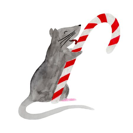 Watercolor illustration of Christmas rat licking candy cane. Hand drawn 2020 symbol animal. Zodiac rat isolated on white background. Watercolor illustration of Christmas rat. New Year template.