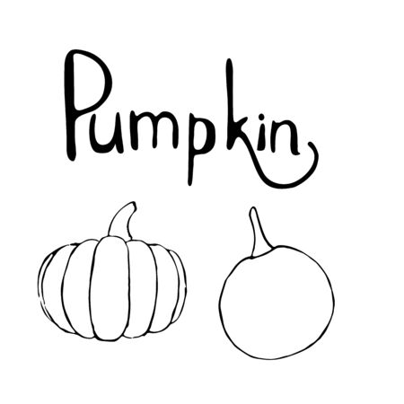 Vector set of hand drawn outline pumpkins and pumpkin text. Hand drawn sketch of garden vegetable and lettering. Black doodle illustration of seasonal autumn crop harvesting. Isolated contour image Фото со стока