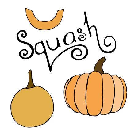 Vector hand drawn orange pumpkins set and squash lettering text. Sketch of garden vegetable of different sizes and pumpkin lettering. Doodle isolated illustration of seasonal autumn crop harvesting