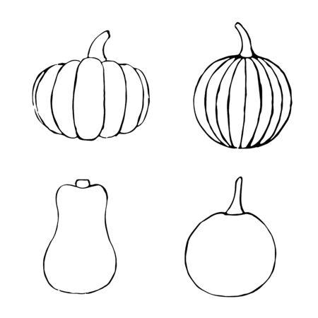 Vector set of hand drawn outline pumpkins. Sketch of garden vegetable. Black doodle illustration of seasonal autumn crop harvesting. Isolated contour image Фото со стока
