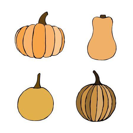 Vector hand drawn orange pumpkins set. Sketch of garden vegetable of different sizes. Doodle illustration of seasonal autumn crop harvesting. Isolated image