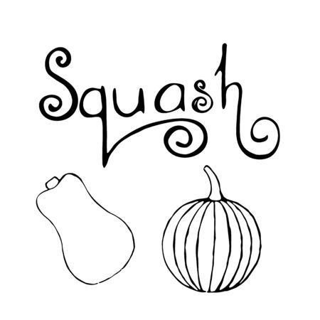 Vector set of hand drawn outline pumpkins and sqaush text. Hand drawn sketch of garden vegetable and lettering. Black doodle illustration of seasonal autumn crop harvesting. Isolated contour image