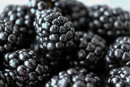 Background with fresh blackberry closeup. Blackberry macro photography. Organic berries of black color. Template for banner, menu, food label, organic shop, garden harvesting. Healthy eating