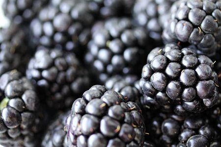 Background with fresh blackberry closeup. Blackberry macro photography with copy space. Healthy organic berries of black color. Template for banner, menu, food label, organic shop, garden harvesting