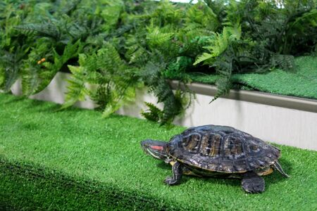 Picture of the turtle on the green grass background. Sea inhabitant near plant leaves Stockfoto
