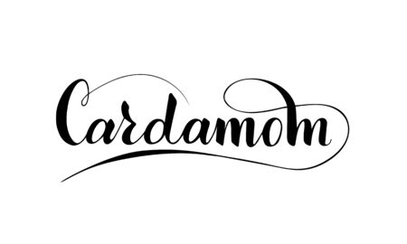 Vector hand written cardamom text isolated on white background. Kitchen healthy herbs and spices for cooking. Script brushpen lettering with flourishes. Handwriting for banner, poster, product label