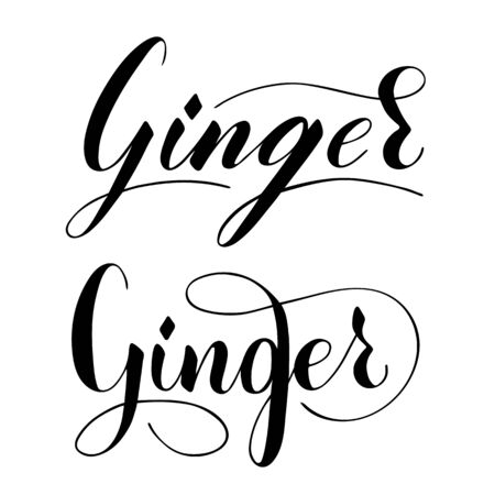 Vector hand written ginger text isolated on white background. Kitchen healthy herbs and spices for cooking. Script brushpen lettering with flourishes. Handwriting for banner, poster, product label