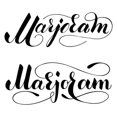 Vector hand written marjoram text isolated on white background. Kitchen healthy herbs and spices for cooking. Script brushpen lettering with flourishes. Handwriting for banner, poster, product label