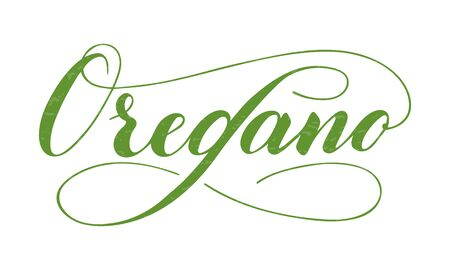 Vector hand written oregano text isolated on white background. Kitchen healthy herbs and spices for cooking. Script brushpen lettering with flourishes. Handwriting for banner, poster, product label