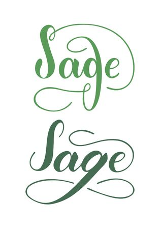 Vector hand written sage text isolated on white background. Kitchen healthy herbs and spices for cooking. Script brushpen lettering with flourishes. Handwriting for banner, poster, product label Ilustração