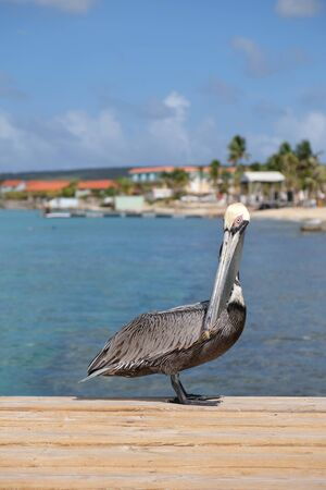 Pelican sitting on a dock with blue water in the background