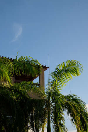 A viewing tower surrounded by palm trees with a blue sky in the background