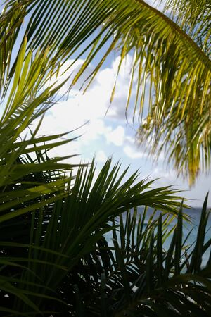 Tropical vegetation and palm leaves partially hiding the ocean
