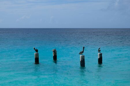 Four pelicans sitting on mooring poles in the water Imagens - 131855607