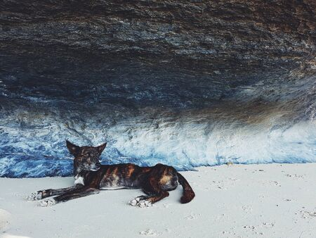 Stray dog laying underneath a colorful overhanging rock on the beach Imagens
