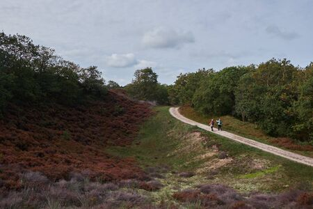 Two women walking on a trail through the dunes and purple heather fields in Bergen Noord-Holland Imagens