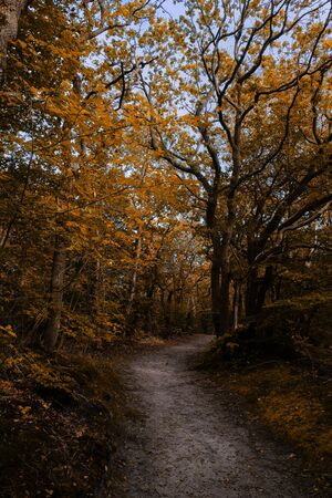 A sand trail leading through a beautiful autumn forest with yellow and orange colors