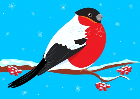 bullfinch: winter illustration bullfinch sitting on a branch is snowing