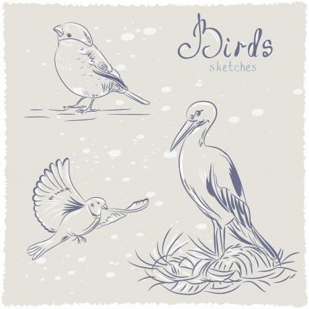bird sketch Stock Vector - 17218686