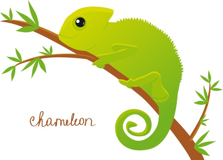 jaszczurka: kameleon Ilustracja