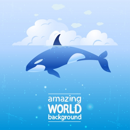 grampus: illustration of a grampus whale in the ocean