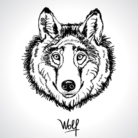 wolf face: illustration of a silhouette of the head of beautiful wolf