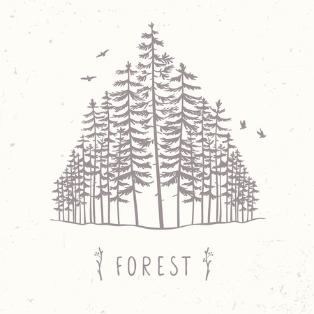 reforestation: Forest from beautiful and amazing tall pines. Hand drawn.