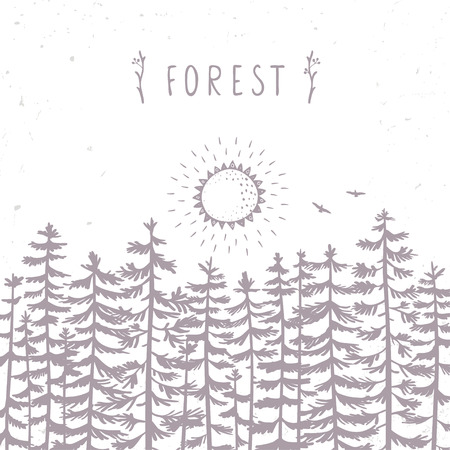 Forest from beautiful and amazing tall pines and sun. Hand drawn.