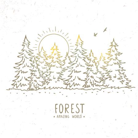 아름 다운 실루엣 스케치 놀라운 가문비 나무 숲 일출과. 세련 된 벡터 일러스트 레이션